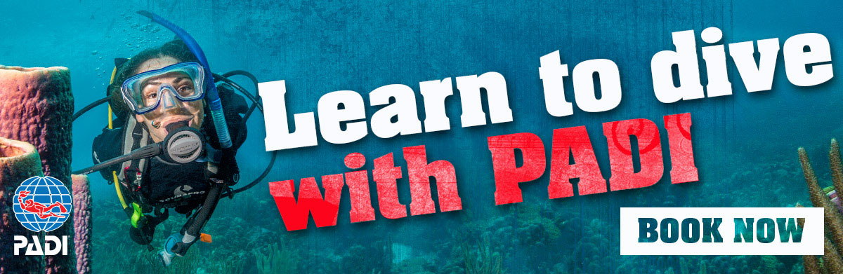 Learn to Scuba Dive this summer