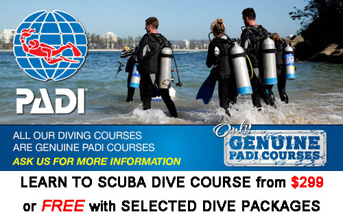 Learn to Scuba Dive this summer free